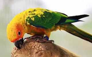papegoja uppflugen på en gren foto