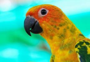 närbild av en färgrik papegoja foto