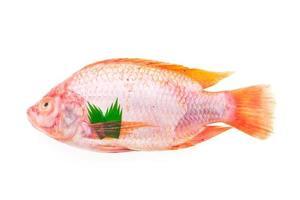 rå färsk fisk foto