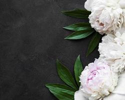 pion blommor på en svart bakgrund