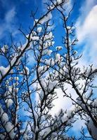 snöiga grenar mot en blå himmel foto