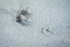 torrt gräs på snön foto