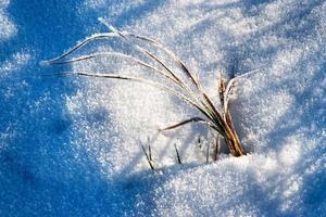 torrt gräs i frusen snö foto