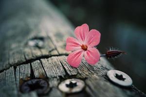 rosa blommor i trädgården på våren foto