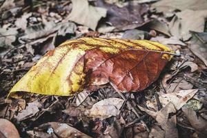 närbild av torra löv foto