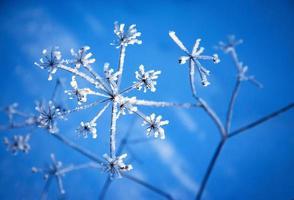 detalj av is på en växt foto