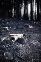 mörk avverkad skog foto
