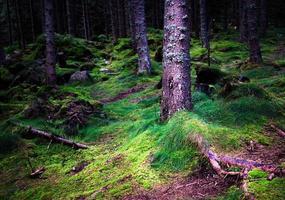 tät och fuktig mörk skog foto