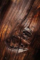grovt trä med knut foto