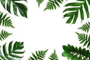 tropiska palmblad ram på en vit bakgrund