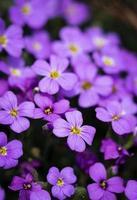 grupp små lila blommor foto