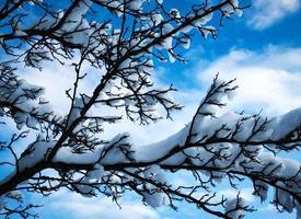 snöiga grenar mot himlen foto