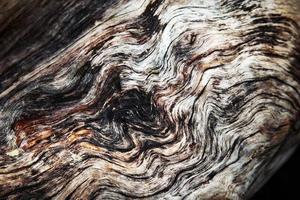 vittrade gammalt trä foto
