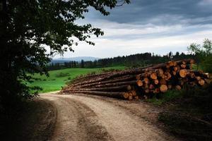 trä stock hög foto