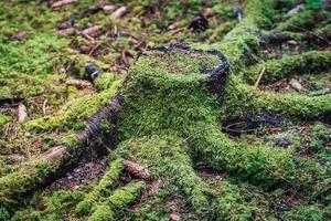 gammal trädstub bevuxen med grön mossa foto