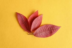 flera röda fallna höstkörsbärsblad på en gul pappersbakgrund låg foto
