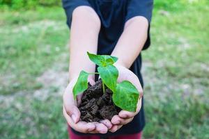 planta i händerna foto