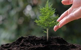 litet träd som växer på grön bakgrund, koncept foto