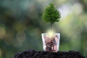 träd växer från ett träd, affärstillväxt koncept foto