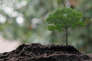 litet träd som växer på grön bakgrund foto