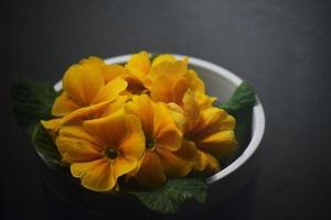 skål med gula blommor foto