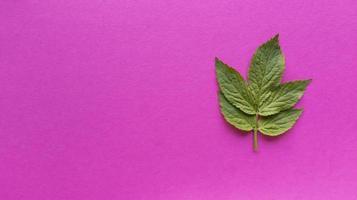 grönt blad på en rosa bakgrund, enkel platt låg med pastell konsistens foto