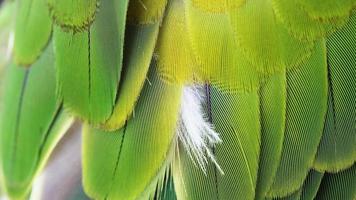 färgglada gröna fågelfjädrar foto