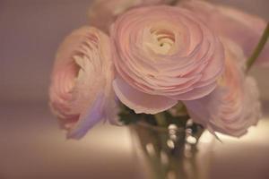 rosa ranunculus blommor på nära håll i en vas med en suddig bakgrund foto