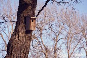 ett fågelhus på ett träd en solig dag foto