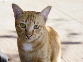närbild porträtt av en orange katt foto