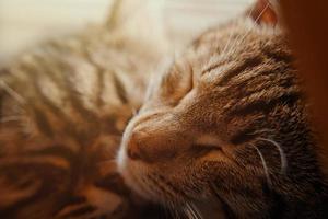 söt sovande tabby katt foto