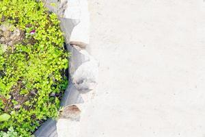 ochitan, sedum och gräs