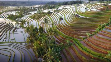 Flygfoto över terrasser på baliris foto