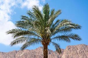 palmträd med berg i bakgrunden foto