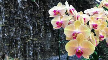 vit orkidéblomma i trädgården foto
