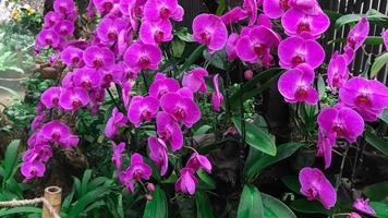 orkidéblomma i trädgården foto