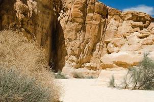 kanjon med vegetation foto