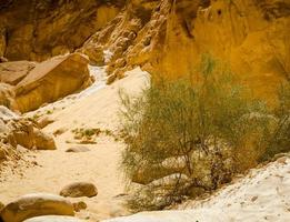 grön buske i sanden på en kanjon