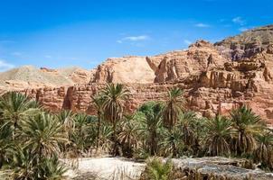 palmer och stenar foto