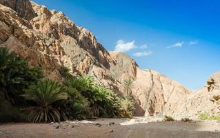 palmer och buskar längs en kanjonvägg