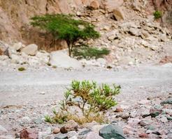 växter som växer i stenar foto