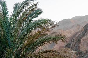 närbild av en palm med berg i bakgrunden