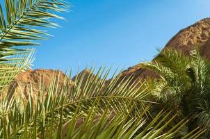 palmblad och stenar foto