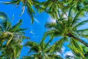 kokospalmer på blå himmel