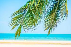 vacker palmträd på stranden