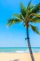 palmträd på stranden