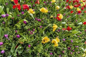 mångfärgade vårblommor i trädgården
