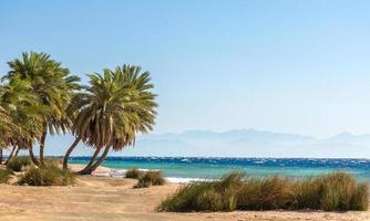palmer och gräs på stranden