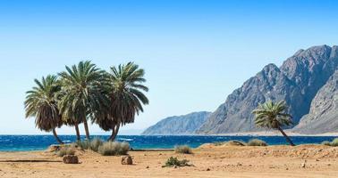palmer och berg på en strand