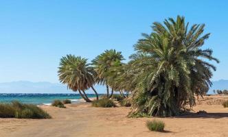 palmer och buskar på stranden